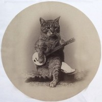 Banjo Kitten